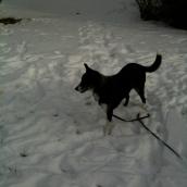 In the snow at grandma's