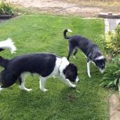 Hobbes and Hannah finding something in grandma's garden