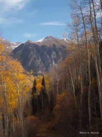 mountaintrees